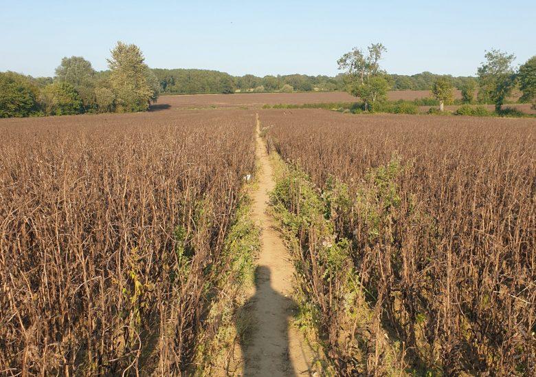 Running Through Fields